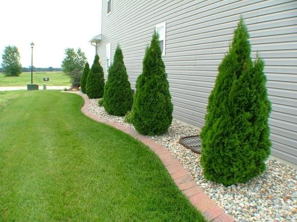 side of house tree line landscape