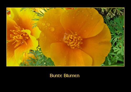 Bunte Blumen por RiesenFotos