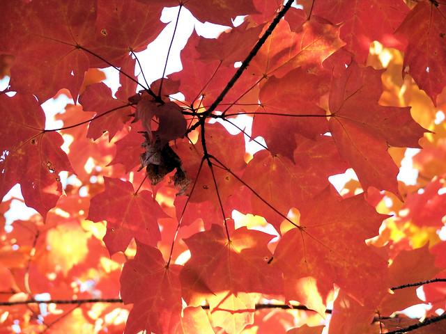 red leaves 3.jpg