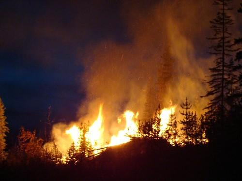Bugwood burn 1