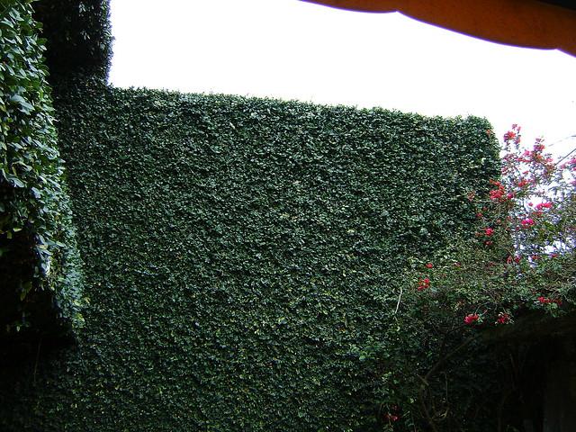 Planta monedita RDM  La planta monedita como  Flickr  Photo Sharing