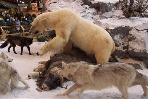 Wildlife Display at Cabelas  This Polar Bear fending
