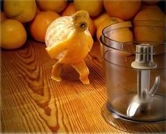 dieta białkowa składniki