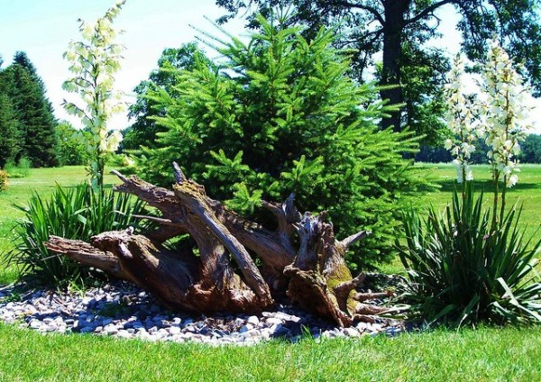 driftwood landscaping wood