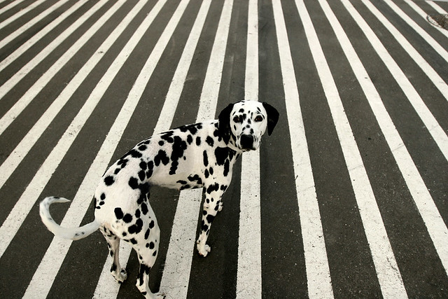 Dots or Stripes - Street Photography and The Art of Composition