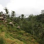 at the tegalalang area