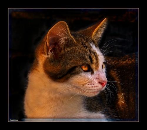 cat-2-test