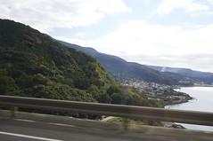 Treed Hills