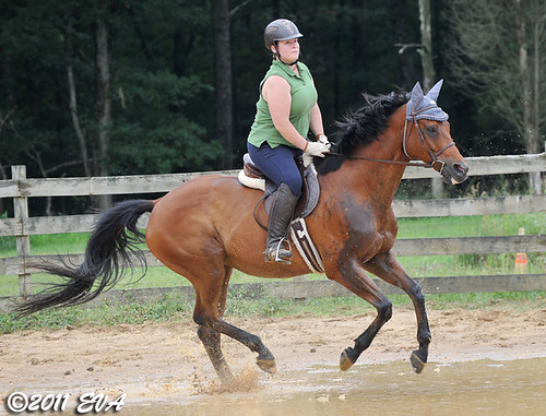 Wizard wants to be an eventer when he grows up (me too)