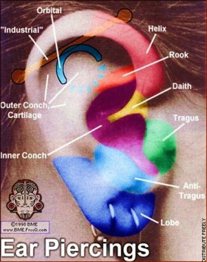 ear piercing diagram | Flickr  Photo Sharing!
