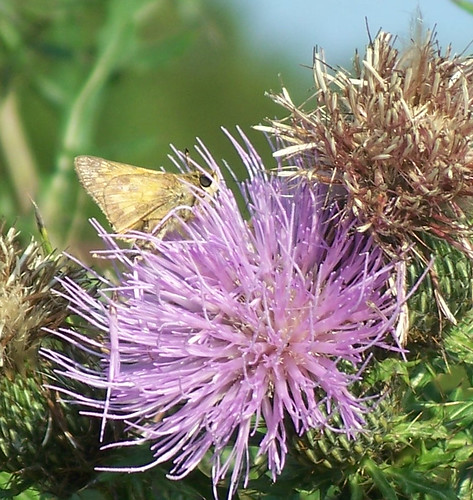 purple fluffy and a butterfly.jpg