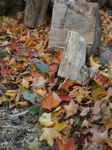 Leaves and from whence they came