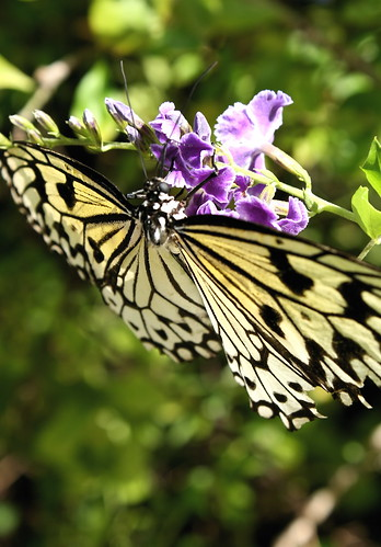 Butterfly and unidentified purple flower. Photo copyright Jen Baker/Liberty Images; all rights reserved