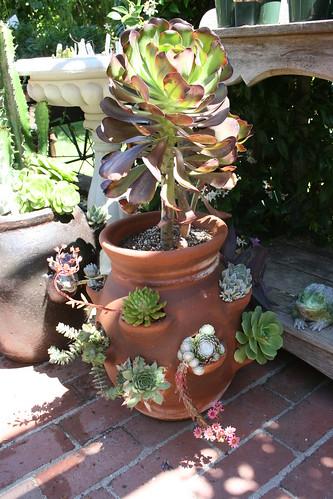 Filoli Gardens - Stawberry Pot