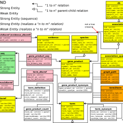 Relationship Code Diagram Elbow Anatomy Gene Ontology Entity By Florian