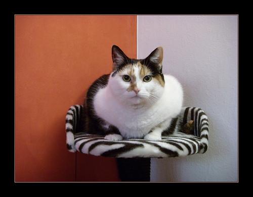 Kedi - Cat - Katze