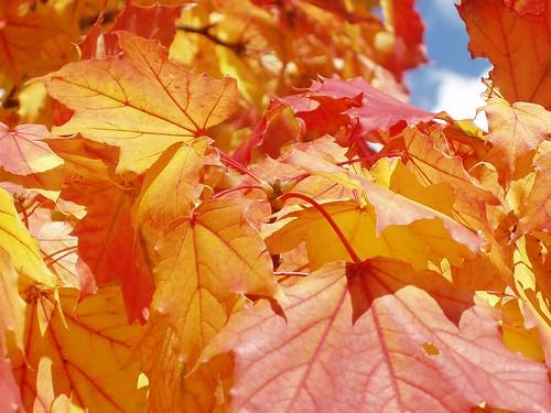 200810040043_autumn-colours