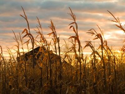 harvest sunrise