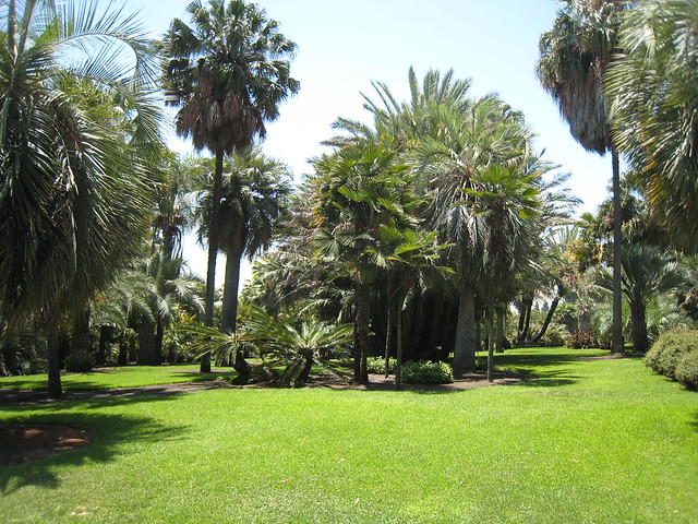 Exploring the Huntington Desert Garden