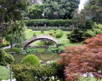 Bridge, Koi pond, Japanese Garden, Huntington Library, May ...