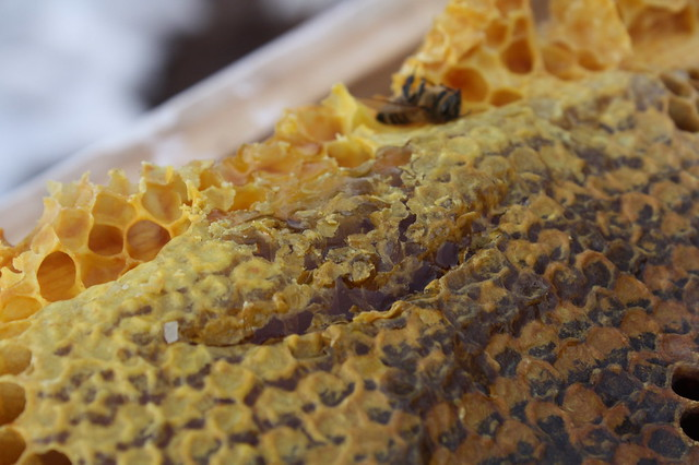 honey is in the capped cells (with a little bee corpse in the background)