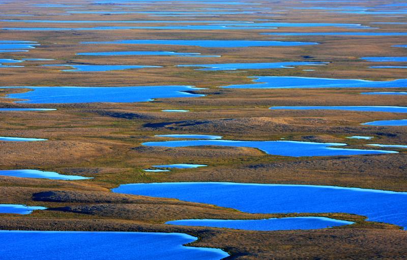 tundra under sunshine