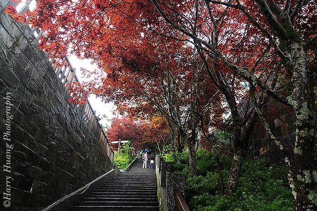 1D30_7953-Taipingshan Villa. I-Lan. Taiwan 宜蘭太平山莊-步道-階梯-樓梯-紫葉槭 | Flickr - Photo Sharing!