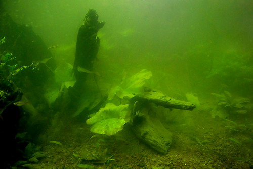 Murky Water by Lisa Brewster CC Flickr