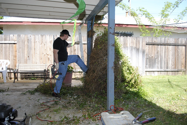 Cleaning the Back Patio