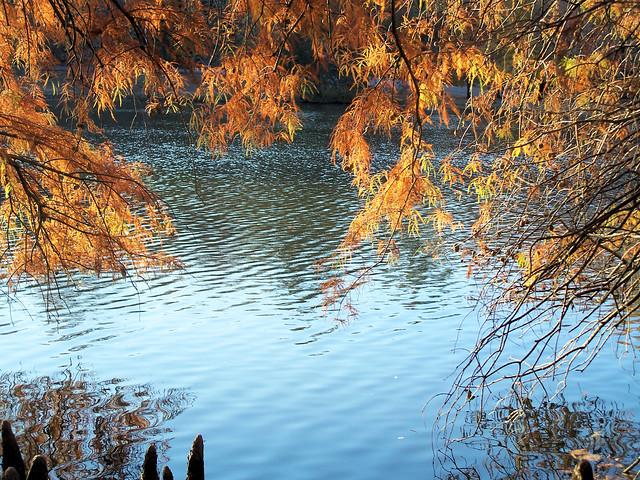 autumn branches.jpg