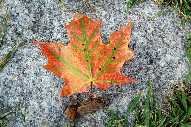 Autumn Emblem