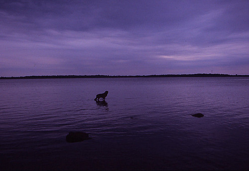 dog in blue by gnawledge wurker