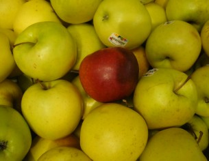 yellow apples with read one in middle