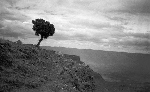 tree on the edge