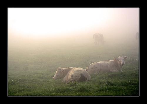 Aube champêtre ! - Rural dawn !