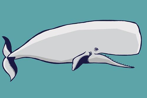 Grey Sperm Whale