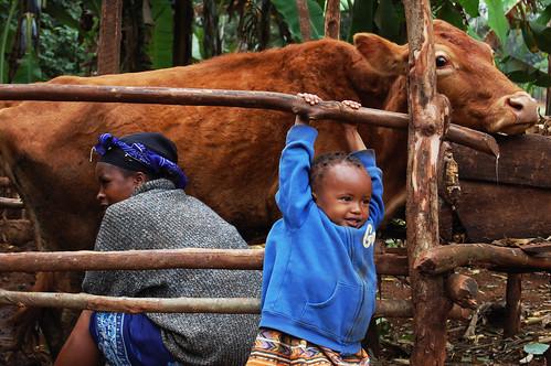 Faith Kivuti and Mom Milking a Cow