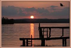 L7M4354_SUNSET_BIRD_Smith_Mountain_Lake