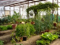 My Organic Vegetable Garden in Arizona   Flickr - Photo ...