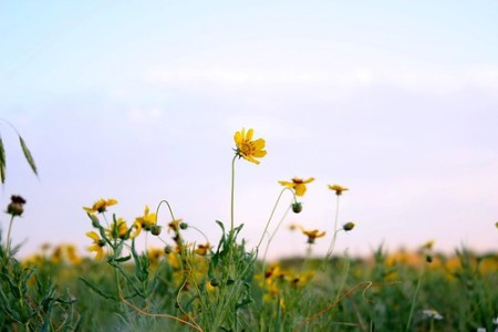 Spring flowers 2009 #1