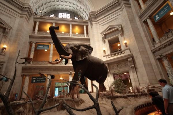 Natural History Museum Washington DC
