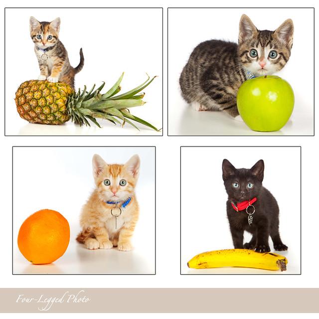 fruity cats alicia dickerson