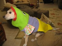 Lucy dog fish costume | Flickr - Photo Sharing!
