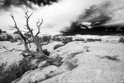 Dead Tree,UT Desert