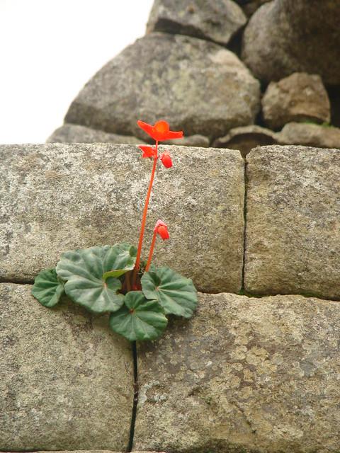 Flores que nascem das pedras. Foto Mariana Martins