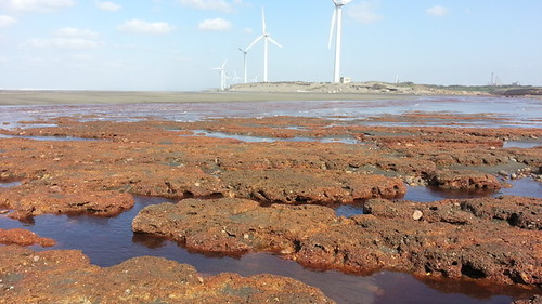 淺談桃園藻礁及其保育之道(上) | 臺灣環境資訊協會-環境資訊中心