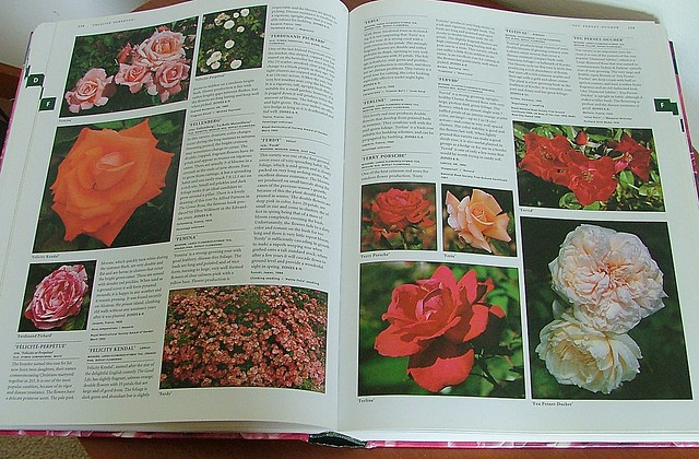 botanica's roses2