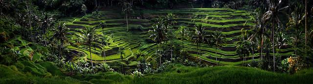 Tegallalang, Bali, Indonesia .....