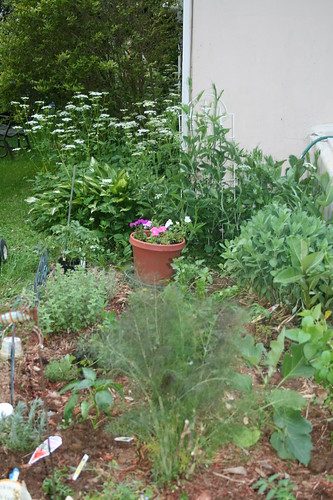 Herb bed newly planted