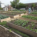 Wilmington's urban farm